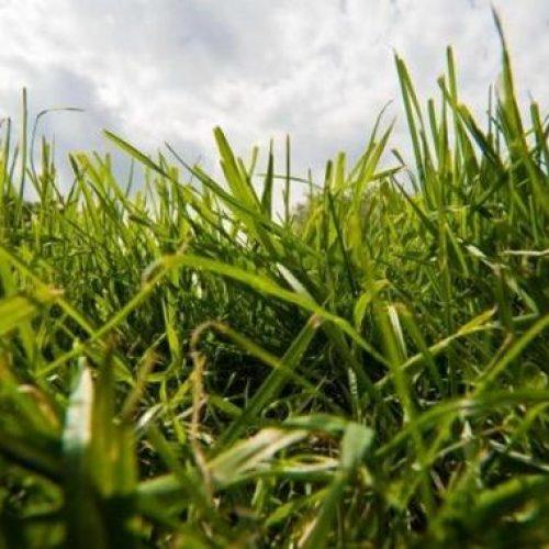 Hohes-Gras-hilft-Voegeln-und-Igeln_big_teaser_article